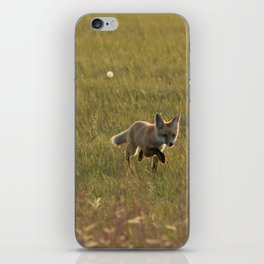 Red Fox Kit iPhone Skin