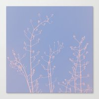 reassurance Canvas Prints featuring Serenity of Rose Jasmine by tanjica