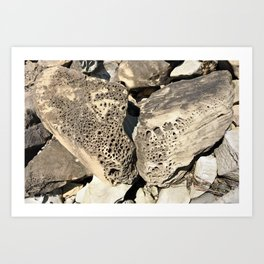 Stone Lace Wings Rock Boulder Washington Northwest Geology Geologist Sandstone Chuckanut Formation Art Print