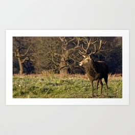 The Stag Art Print