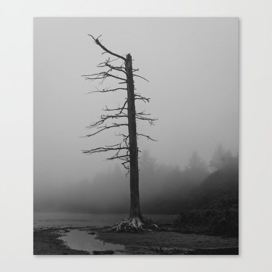 this old tree Canvas Print