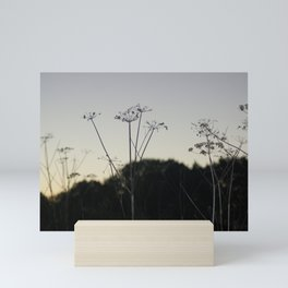 Cow Parsley 1 Mini Art Print