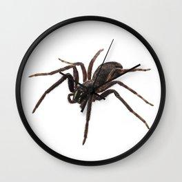 Black spider species tegenaria sp Wall Clock