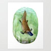 platypus Art Prints featuring Platypus by Kirsten Sevig