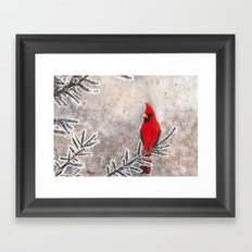 The Red Cardinal in winter Framed Art Print