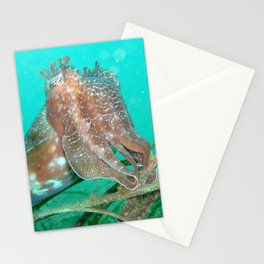 Cuttlefish Sepia sp. Stationery Cards