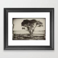 Cottonwood Framed Art Print