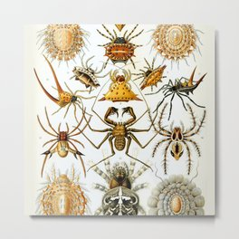 Haeckel Illustration Spiders Metal Print