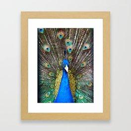Peacock in Splendor Framed Art Print