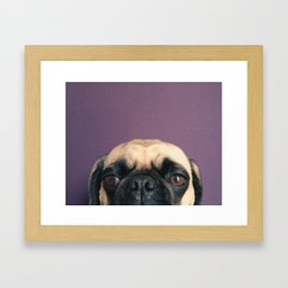 Lurking Pug Framed Art Print