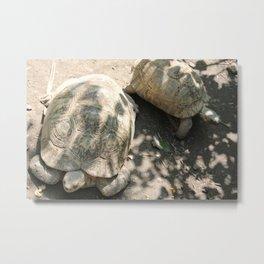 Turtles at the Kansas City Zoo Metal Print