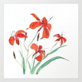 orange day lily Art Print