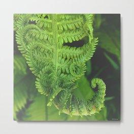 finishing fern series Metal Print