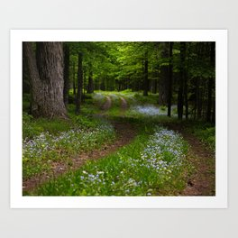 Forget-me-not Trail Art Print