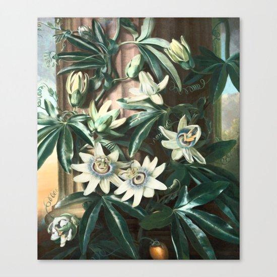 Passion for Passiflora Canvas Print