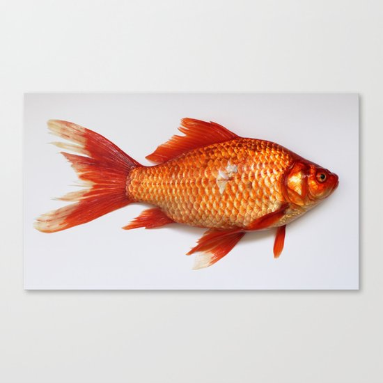 Red Gold Fish Canvas Print