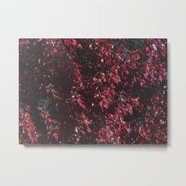 Red leaves in Harris Park London Canada Metal Print
