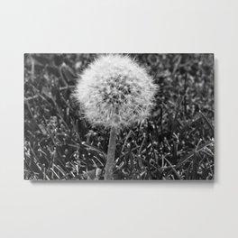 Make a wish and blow! Metal Print