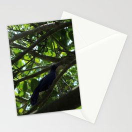 Great Tailed Grackle near Tulum Stationery Cards