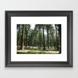 Dartmoor woods Framed Art Print