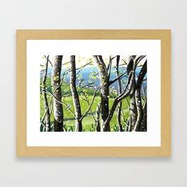 Wild Cherry Blossom  Framed Art Print