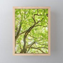 Beech Tree Framed Mini Art Print