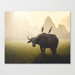 Water Buffalo And Egrets Canvas Print
