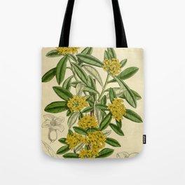 Daphne giraldii, Thymelaeaceae Tote Bag