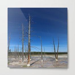 Lodgepole Pines In Geyser Basin Metal Print