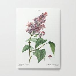 Comon lilac (Lilac vulgaris) from Traité des Arbres et Arbustes que l'on cultive en France en pleine Metal Print