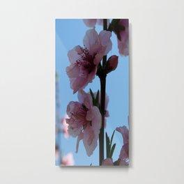 Transluscent Pastel Pink Peach Tree Blossom Metal Print
