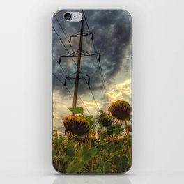 field of faded sunflowers  iPhone Skin