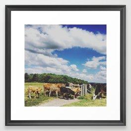 Bovine Blockade Framed Art Print