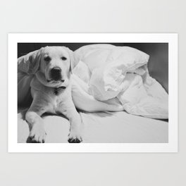 Sleepy Labrador Art Print