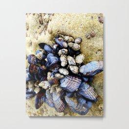Mussels Photo Metal Print