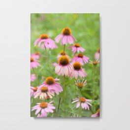 Pink Echinacea Wildflower Metal Print