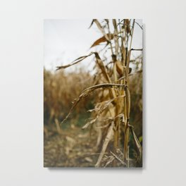 Autumn Cornstalk I Metal Print