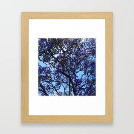 Jacaranda in Spring Framed Art Print