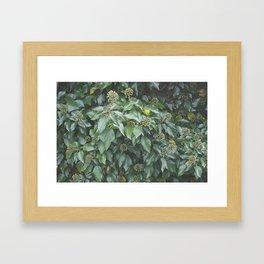 Ivy Seeds Framed Art Print