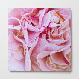 Strawberry Blonde Camellia Metal Print