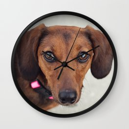 Doxie Dares You  Wall Clock