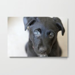 Puppy Face Metal Print