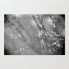 dreamy breeze Canvas Print