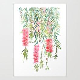 bottle brush tree flower Art Print