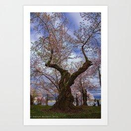 """Cherry Tree"" - DC Cherry Blossom Festival Art Print"