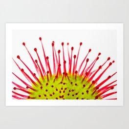 Common sundew (Drosera rotundifolia) Art Print