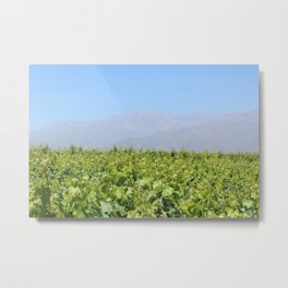 vineyard Metal Print