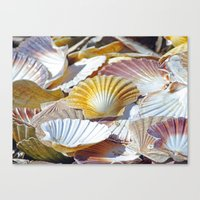 shells Canvas Prints featuring Shells by jacqi