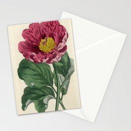 Daurian Peony / W. Curtis 1857 Stationery Cards