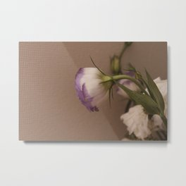 Chinese rose. tenderness ,  affection ,  gentleness ,  softness ,  caress Metal Print